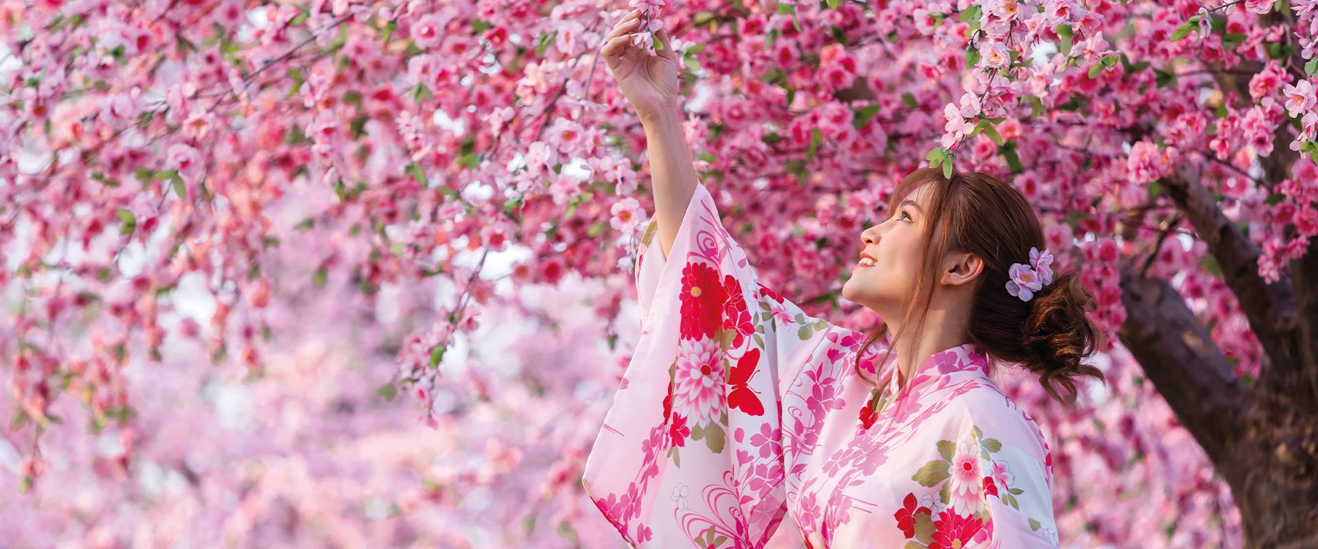 HANAMI: è finalmente arrivato il momento di ammirare i ciliegi in fiore! 🌸